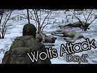Wolves Sounds Then Attacks